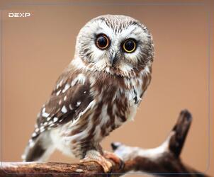 Коврик DEXP OM-XS Owl