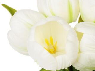 Светильник декоративный Старт LED Тюльпаны 5 белый зеленый, белый