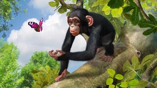 Игра для Xbox 360 Zoo Tycoon