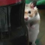 Чем отличается лазерная мышь от светодиодной
