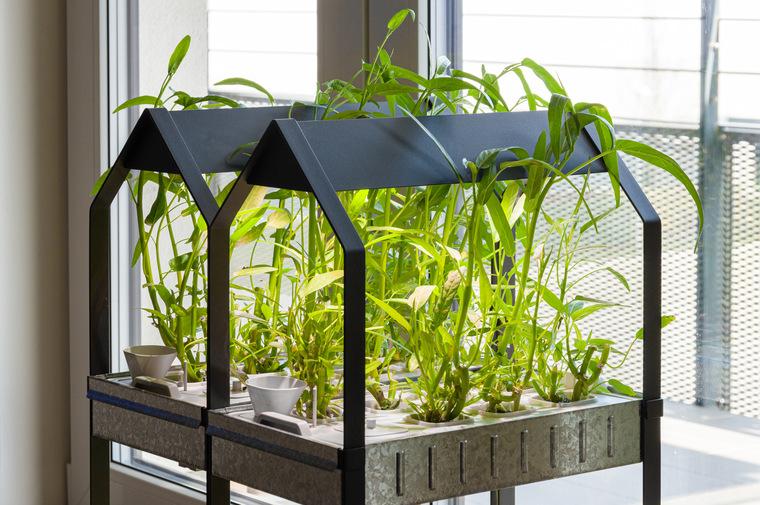 Гидропоника: как вырастить клубнику у себя дома